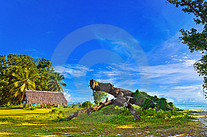 Canopy And Tree At Tropical Beach Stock Images - Image: 20717914