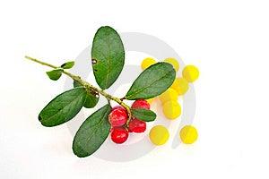Vitamins Stock Image - Image: 20717971