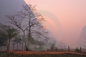 Bare Majestic Tree At Dawn Stock Image - Image: 20718681