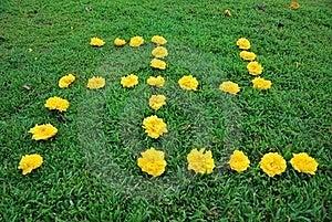 Arranged Yellow Flowers Royalty Free Stock Image - Image: 20718776