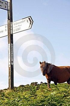 Moorland Pony Express  Stock Photos - Image: 20720913