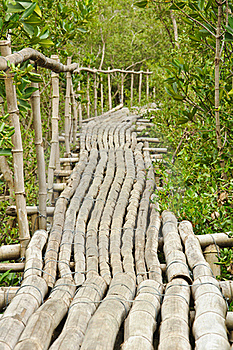 Bamboo Walkway In Mangrove Forest Stock Photo - Image: 20721290