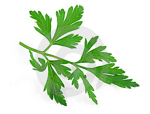 Parsley Stock Images - Image: 20723394