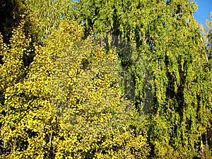 Autumn Trees And Blue Sky Stock Photography - Image: 20733632