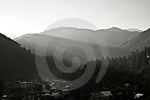Coniferous Forest On The Mountain Stock Images - Image: 20736014