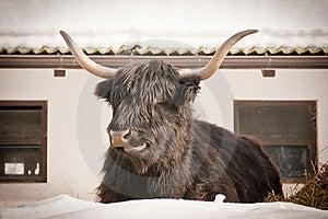 Animal Stock Photo - Image: 20755060