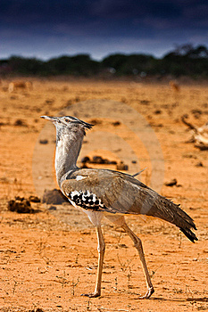 Portrait Of An African Bird Stock Photography - Image: 20763172