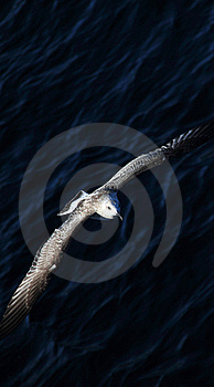 Flying Seagull Stock Images - Image: 20768124