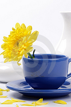 Yellow Mums In A Teacup Stock Images - Image: 20793314