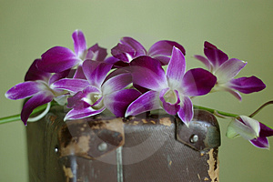 Violet Orchid Stock Image - Image: 2080411