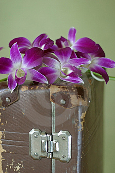 Violet Orchid Stock Image - Image: 2080441