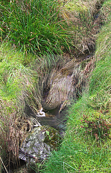 Grassy Stream Stock Photo - Image: 2080860