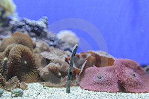 Tropical Fish Royalty Free Stock Image - Image: 2086186