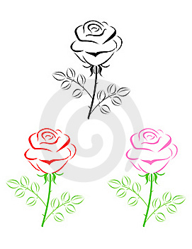 Rose  Royalty Free Stock Photography - Image: 20812087