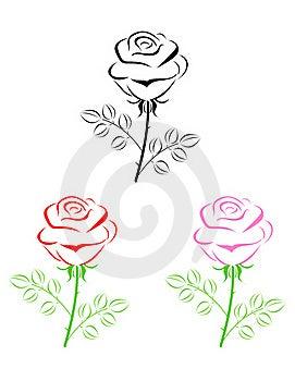 Rose  Royalty Free Stock Photography - Image: 20812087