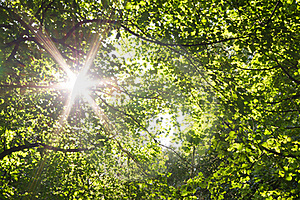 Sun star through woodland canopy Stock Photo