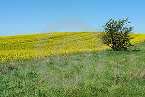 Solitary Lonely Tree On A Hill Royalty Free Stock Images - Image: 20824839