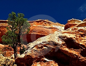 Lone Tree On The Cliff Stock Photo - Image: 20832730