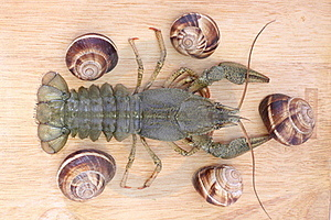 Crayfish On A Wood With Snails Royalty Free Stock Photos - Image: 20834538