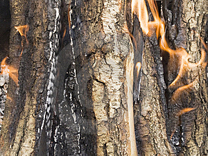 Firewood Burning Royalty Free Stock Images - Image: 20837379