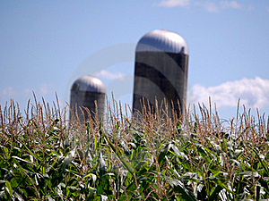 Corn Feild With Two Silos Stock Photography - Image: 20847502