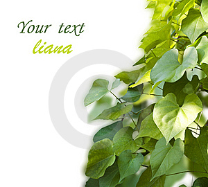 Background From The Leaves Royalty Free Stock Photography - Image: 20858087