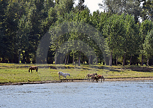Pony Near River Stock Photography - Image: 20885612