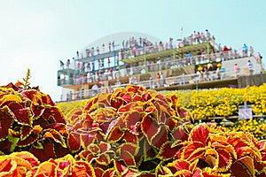 Garden Flower Stock Photography - Image: 20893832