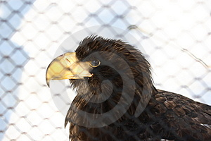 Proud Captive Royalty Free Stock Photo - Image: 2098115