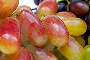 Berries Of Vine Royalty Free Stock Image - Image: 20906236