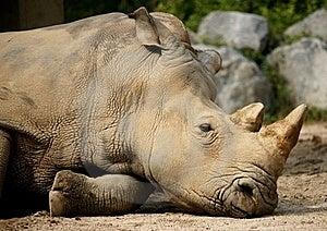 Rhinoceros Stock Photo - Image: 20914690