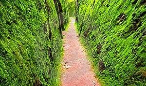 Green Cavern Walls Stock Photography - Image: 20930852
