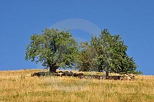 Sheeps Hiding From Sun Stock Photos - Image: 20934663