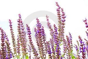 Tiny Flowers Stock Photo - Image: 20939700