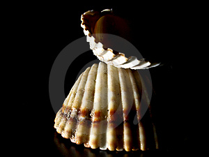 Shell Structure Stock Photo - Image: 20944950