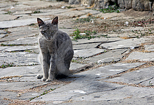 Cat On The Old Road Stock Photography - Image: 20962782