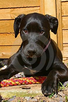 Sad Puppy Royalty Free Stock Photos - Image: 20987638