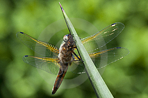 Dragonfly Stock Photos - Image: 20991553