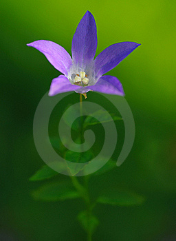 背景会开蓝色钟形花的草绿色 库存图片 - 图片: 20993814
