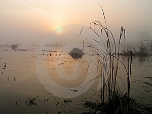 Foggy Morning On Tulchinskom Lake. Stock Photos