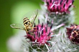 Tiny fly Royalty Free Stock Photography
