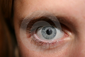 Intense Eagle Eye Free Stock Photography