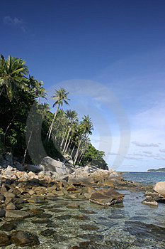 Coastal Coconut Trees Free Stock Photos