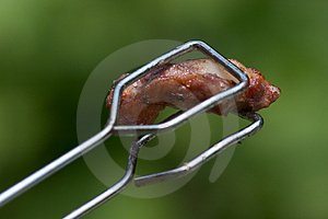 Piece of meat Royalty Free Stock Photography