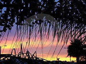 Door de palm Stock Afbeelding