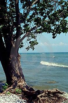 Árvore na praia rochosa Imagens de Stock