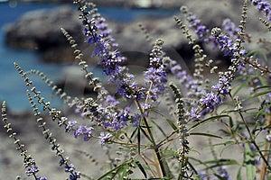 Purple Blue Flowers Stock Image