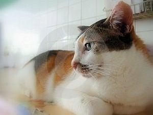 Vue de côté de chat Photo libre de droits