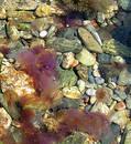 Medusa dance Free Stock Image