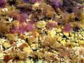 Jelly fish Royalty Free Stock Photography